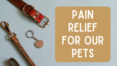 Pain Relief For Our Pets