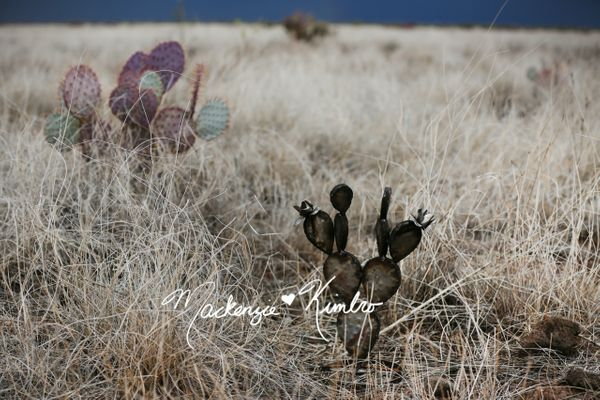 Prickly Pear Metal Cactus