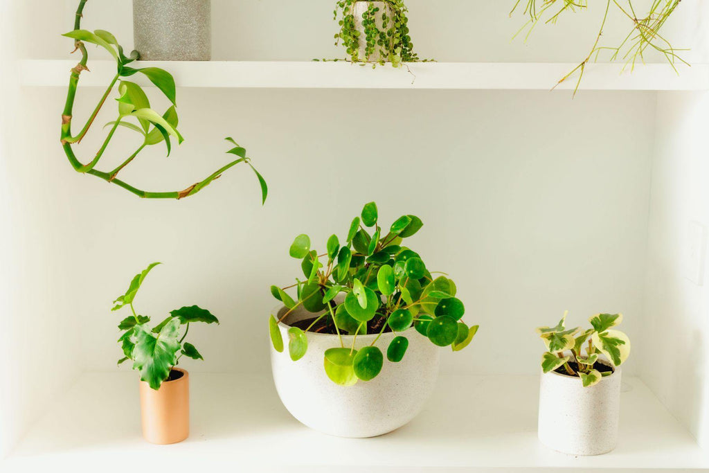 Beginners Guide to Caring for Plants