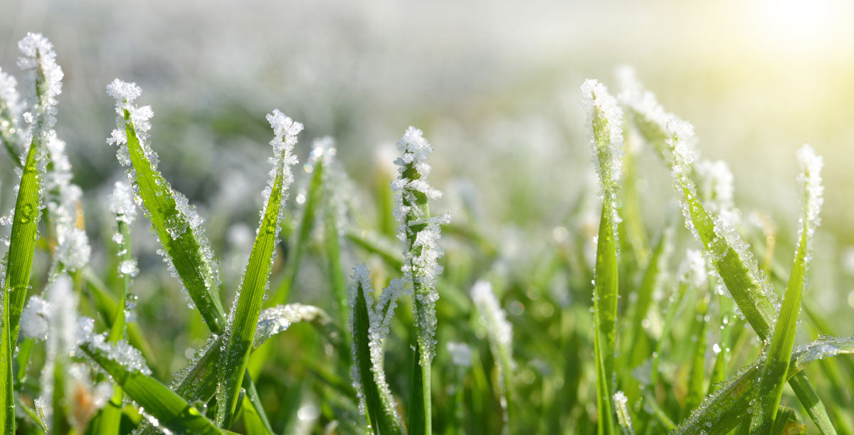 Preparing your Lawn for the Winter months ❄️