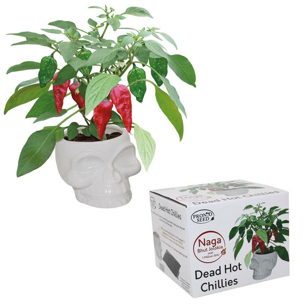 Dead Hot Chilli Ceramic Skull Planter Grow Your Own Plant Kit