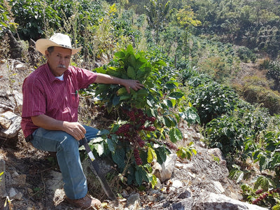 Meet Our Farmers - Finca El Zapote, Guatemala