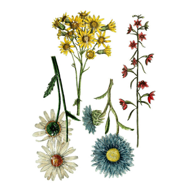 Iron Orchid Designs Decor Image Transfer - Wild Flowers