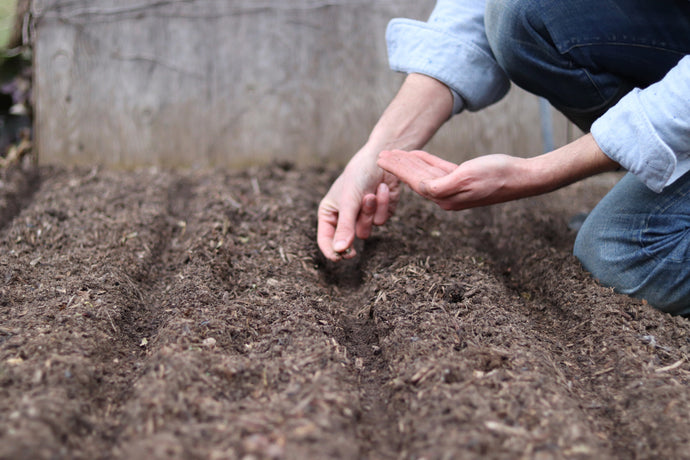 Introduction to Direct Sowing