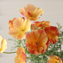 Load image into Gallery viewer, California Poppy 'Thai Silk Apricot Chiffon'