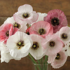 Shirley Poppy 'Mother of Pearl'