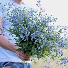 Load image into Gallery viewer, Chinese Forget-Me-Nots 'Blue Showers'