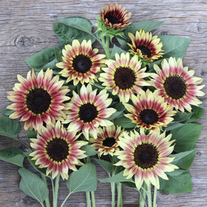 Sunflower Gift Collection