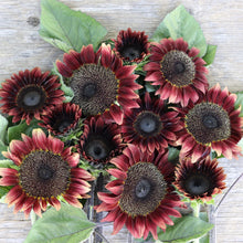 Load image into Gallery viewer, Sunflower Gift Collection