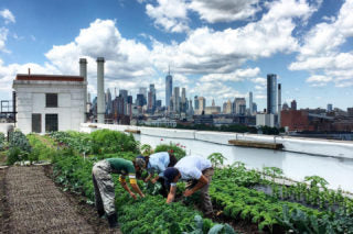 Brooklyn Grange Rooftop Farms