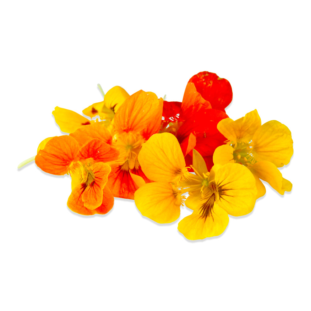 Nasturtium Edible Flowers (Local), Box