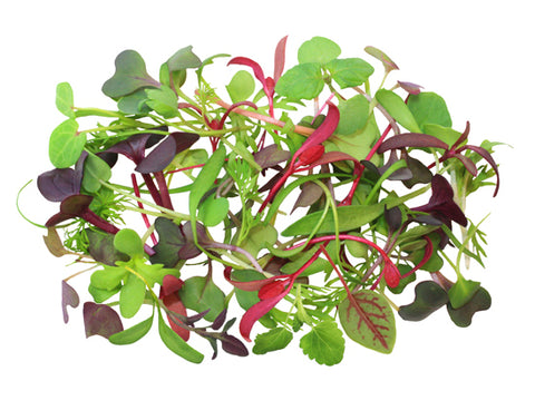 Micro Greens Rainbox Mix (Local), 2 oz