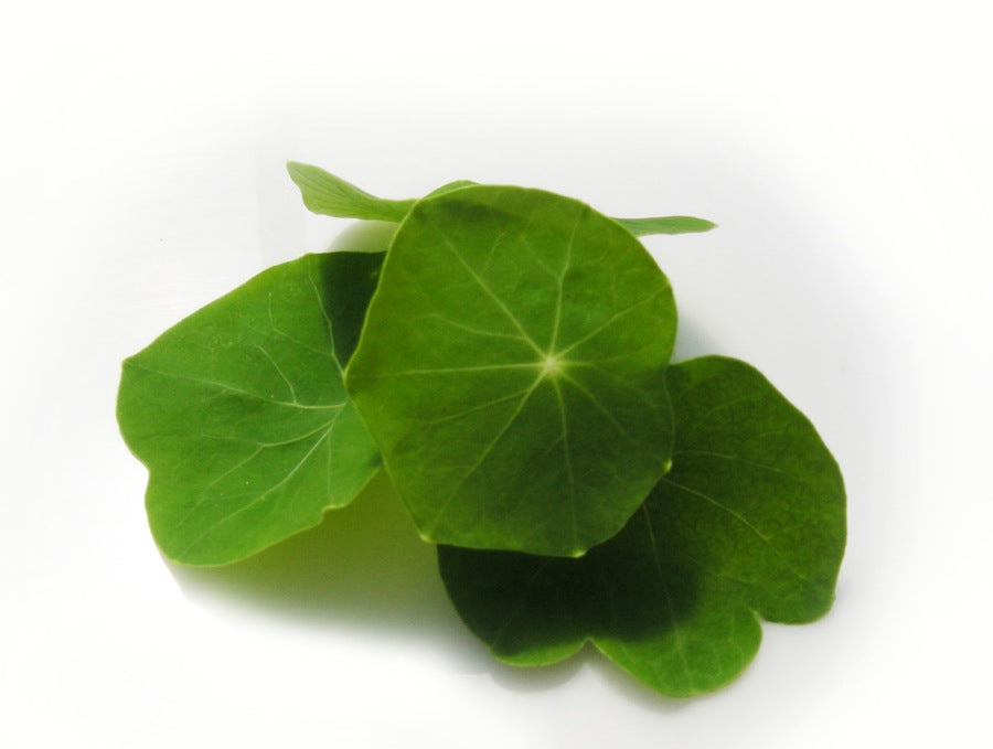 Micro Nasturtium (Local), 2oz