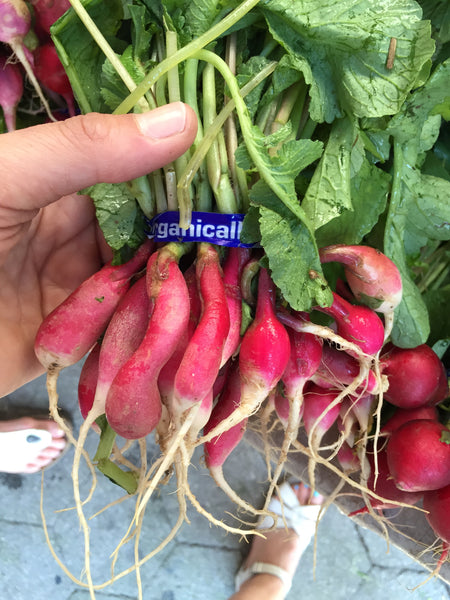 Radish French Breakfast (Local), Bunch