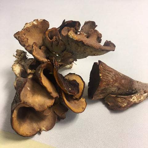 Chanterelle-massue Mushroom (France), Lb