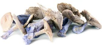 Blue Foot Mushroom (France), Lb