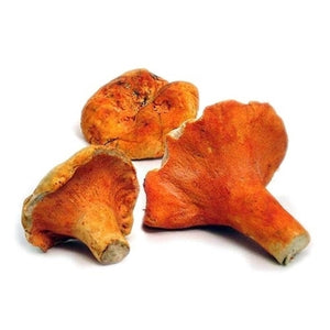 Lobster Mushrooms (domestic), Lb