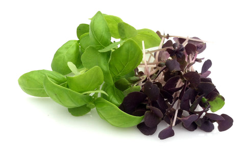 Micro Basil (Brooklyn Grange), 2oz