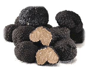 Tuber uncinatum Truffle (Europe), 2oz