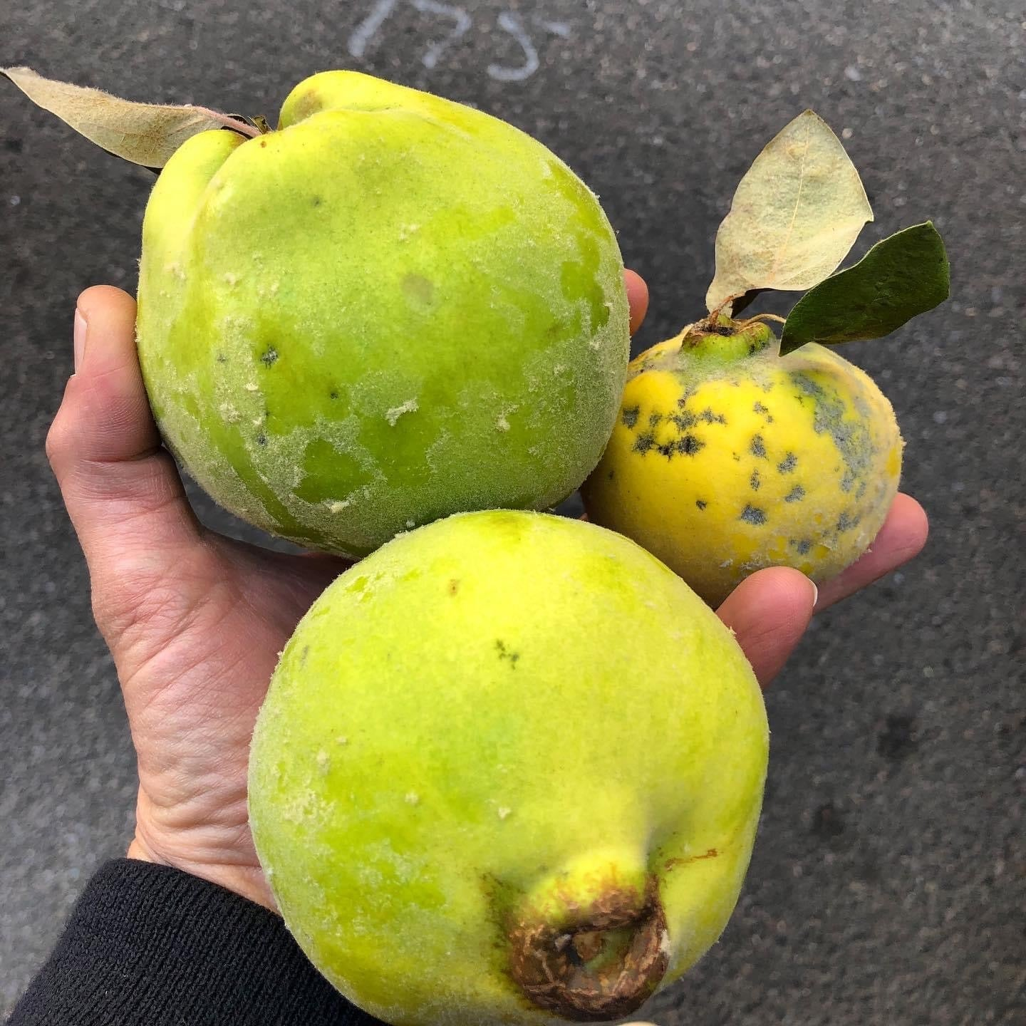 Quince (local), Lb