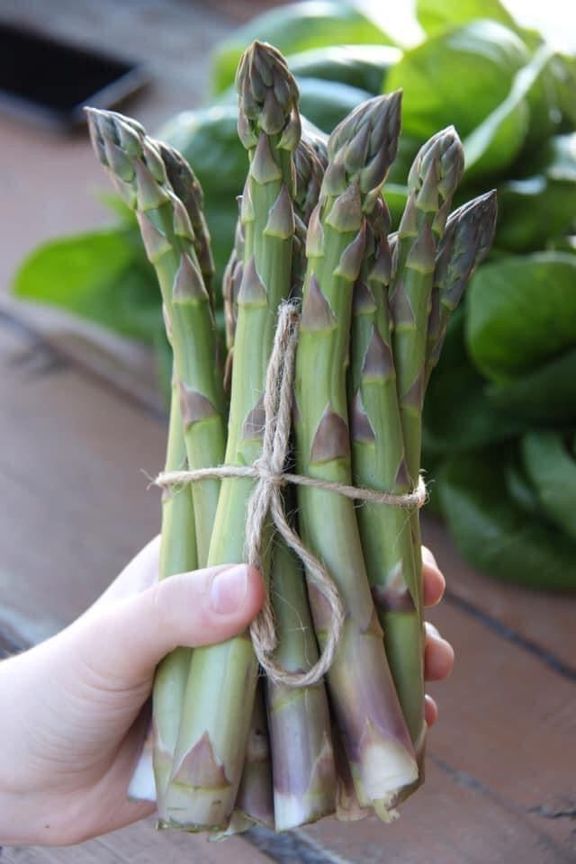 Asparagus green (Canada), bunch