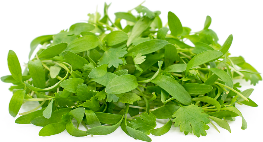 Micro Cilantro (Local), 4oz