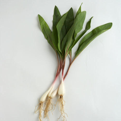 Ramps Bulbs wild (Local), Pint