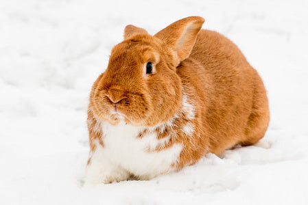 How to Keep Rabbits Warm in Winter?