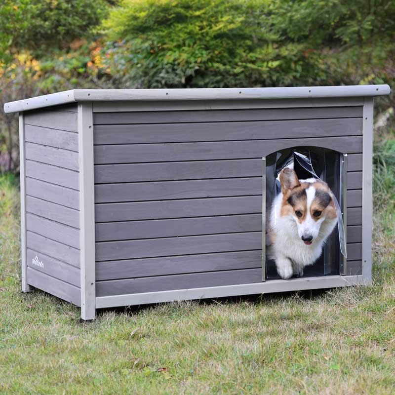cool dog houses