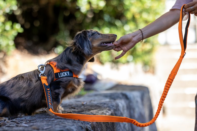 When to use a dog harness