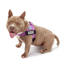 Load image into Gallery viewer, DF Co. Purple Dog Harness