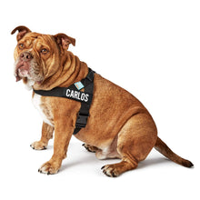 Load image into Gallery viewer, DF Co. Black Dog Harness