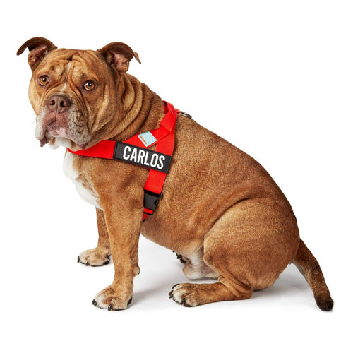 DF Co. Red Dog Harness