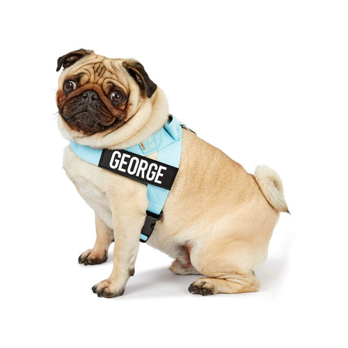 DF Co. Sky Blue Dog Harness