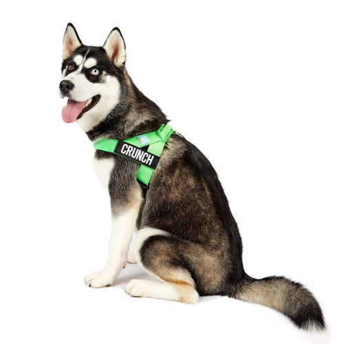 DF Co. Neon Green Dog Harness