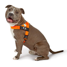 Load image into Gallery viewer, DF Co. Hi-Vis Orange Dog Harness