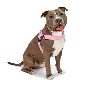 DF Co. Pink Dog Harness