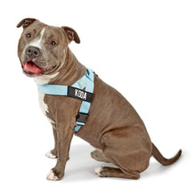 Load image into Gallery viewer, DF Co. Sky Blue Dog Harness