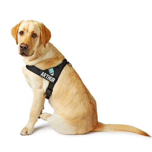 DF Co. Black Dog Harness