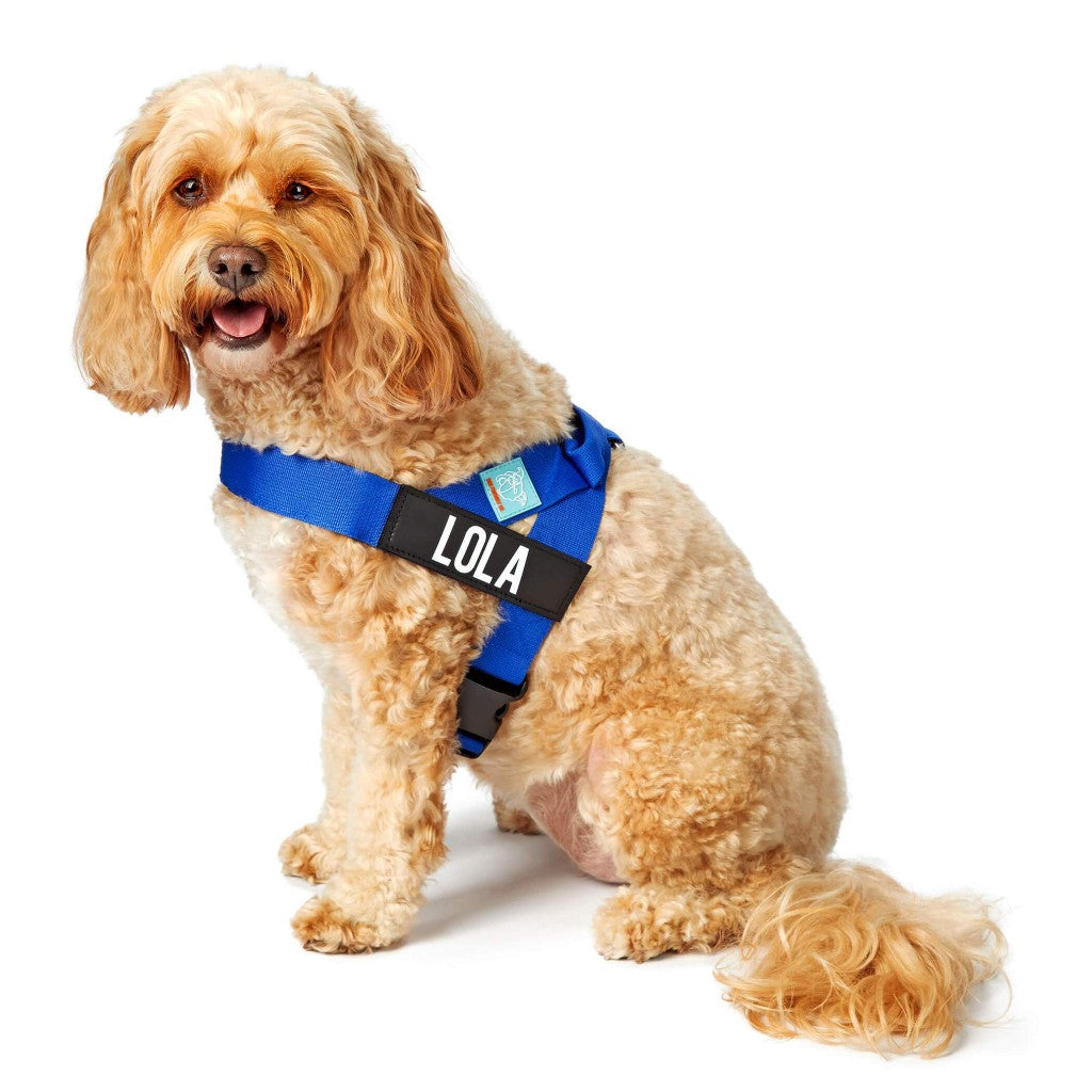 DF Co. Classic Blue Dog Harness