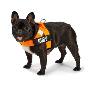 DF Co. Hi-Vis Orange Dog Harness