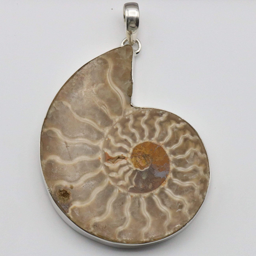 Hepburn and Hughes Ammonite Pendant, Large 60mm Madagascan in Sterling Silver
