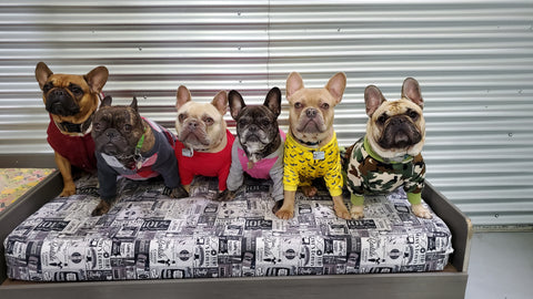 yycfrenchies