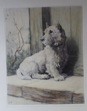 Load image into Gallery viewer, Herbert Thomas DICKSEE (1862 - 1942). Original Etching of a West Highland Terrier or Westie