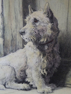 Herbert Thomas DICKSEE (1862 - 1942). Original Etching of a West Highland Terrier or Westie