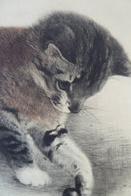 Load image into Gallery viewer, Original Etching by Kurt Meyer-Eberhardt (1895 - 1977). Kitten Chasing a Little Ball. Pencil inscription below
