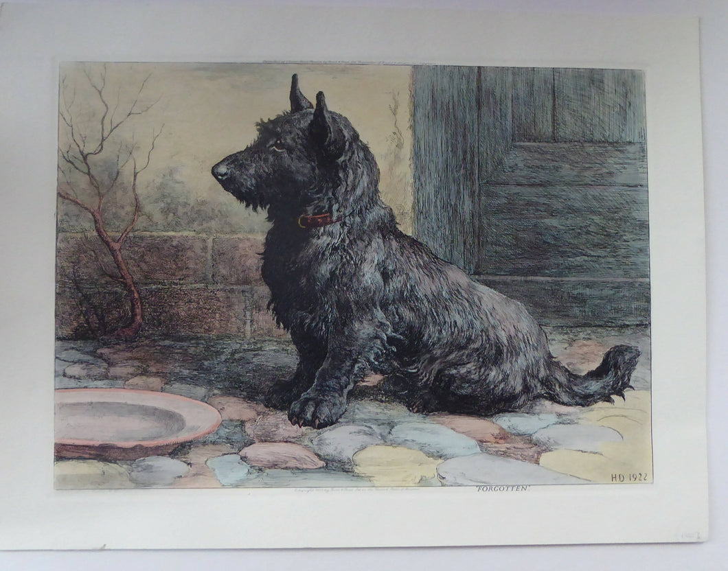Herbert Thomas DICKSEE (1862 - 1942). Original Etching: FORGOTTEN. Scottish Terrier with Empty Supper Bowl
