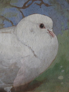 SCOTTISH ART. Edwin Alexander (1870 - 1926). Watercolour and Gouache Study of a White Dove
