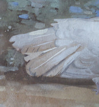 Load image into Gallery viewer, SCOTTISH ART. Edwin Alexander (1870 - 1926). Watercolour and Gouache Study of a White Dove