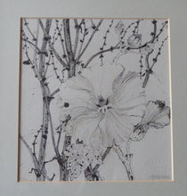 Load image into Gallery viewer, SCOTTISH ART. Jane Hyslop: Original Pen and Ink Drawing of Wildflowers and Plants. Signed and dated in pencil. FRAMED